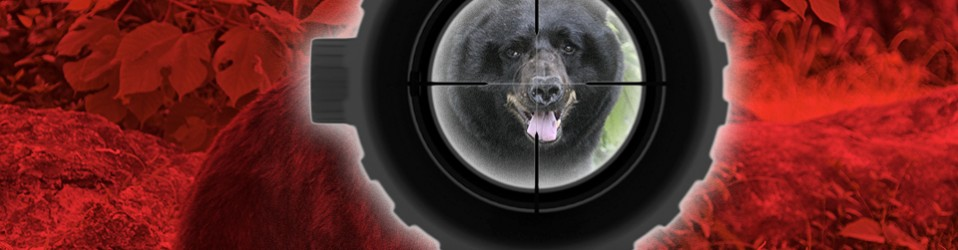 Barely a Day to Hunt Bear: A Lesson in Behavior