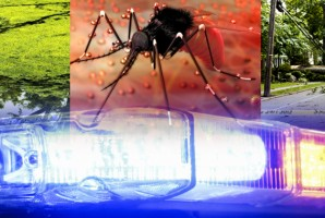 Zika, Storms, Pollution and Violence: Someone Ought to Do Something